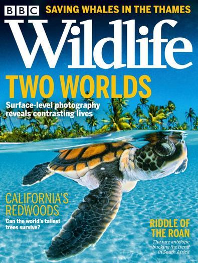 BBC Wildlife digital cover